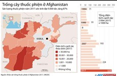 [Infographics] Choáng váng với số lượng cây thuốc phiện ở Afghanistan