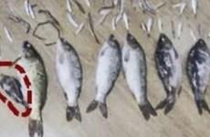Nhận án tù hơn ba năm chỉ vì bắt một con cá nặng 50gram