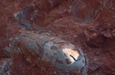 Phát hiện ổ trứng khủng long gần như còn nguyên vẹn ở Trung Quốc
