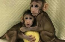 Các nhà khoa học Trung Quốc nhân bản vô tính khỉ thành công