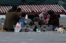 Cơ quan Liên hợp quốc cứu trợ Palestine đứng trước nguy cơ sụp đổ