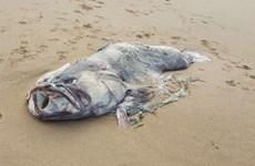 Cặp vợ chồng phát hiện ra xác 'quái vật biển' ở bờ biển Australia