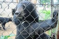 """Sao Việt lên tiếng """"ủng hộ"""" chấm dứt nạn nuôi nhốt gấu"""
