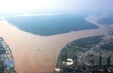 Đồng bằng sông Cửu Long có thể tổn thất hàng tỷ USD từ cá trắng