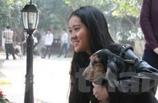 Hàng trăm chú cún cưng cùng hội tụ ở bãi đá sông Hồng