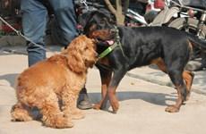 """[Photo] Hàng trăm chú cún tung tăng thi """" sắc đẹp"""" ở bãi sông Hồng"""