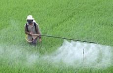 Hà Nội: Lãnh đạo huyện chịu trách nhiệm nếu để sâu bệnh phát sinh dịch