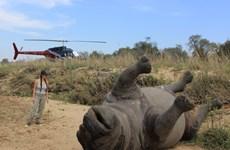 Tìm kiếm giải pháp công nghệ chống tội phạm động vật hoang dã