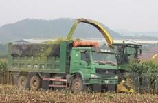 [Photo] Ứng dụng công nghệ cao tại cụm trang trại bò sữa tập đoàn TH