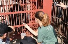 Cứu hộ khẩn cấp cá thể gấu bị suy kiệt sức khỏe tại Quảng Ninh