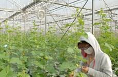 Hà Nội hỗ trợ 64 tỷ đồng phát triển vùng nông nghiệp chuyên canh