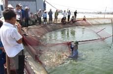 Hỗ trợ Quảng Ninh 50 tấn hóa chất phòng dịch bệnh thủy sản