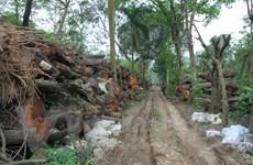 Thu gần 1,5 tỷ đồng từ đấu giá gỗ, củi thuộc đề án cải tạo cây xanh