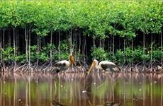 Việt Nam thiết lập thêm 2 khu đất ngập nước và sinh cảnh liên kết
