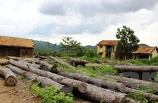 """Chặt phá, lấn chiếm rừng ở Lâm Đồng: """"Biết rồi, khổ lắm, nói mãi"""""""