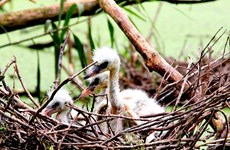 Vườn Quốc gia U Minh Thượng trở thành Khu Ramsar thế giới