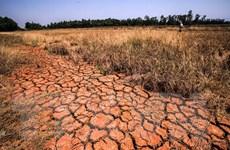 Đồng bằng sông Cửu Long: Hạn mặn khốc liệt, lại ngóng mưa nhân tạo?