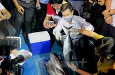 Vụ cá chết: Đối tượng gây ô nhiễm bắt buộc phải khắc phục hậu quả