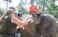 Tỉnh Đắk Lắk nhận chương trình tài trợ 50.000 USD để bảo tồn voi