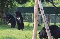 Phát động thay thế sử dụng mật gấu bằng 32 cây thuốc, vị thuốc Đông y