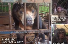"""Cứu hộ thành công 3 cá thể """"động vật sách đỏ"""" bị nuôi làm cảnh"""