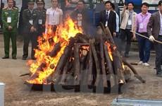 Tiêu hủy hơn 2.000 kg ngà voi và 70 kg sừng tê giác tại huyện Sóc Sơn