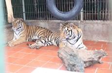 Hoa Kỳ cam kết giúp Việt Nam chống buôn lậu động vật hoang dã