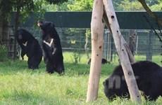[Video] Ngắm khu nhà gấu đôi khổng lồ tại Vườn quốc gia Tam Đảo
