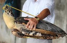 Mở phiên tòa xét xử vụ buôn lậu hơn 10 tấn rùa biển ở Nha Trang