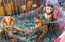 Liên tiếp giải cứu thành công nhiều cá thể động vật hoang dã