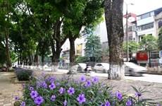 Xâm hại cây xanh, vườn hoa có thể bị phạt tới 30 triệu đồng