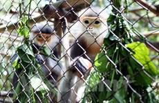 Đề xuất bổ sung 37 loài nguy cấp, quý, hiếm được ưu tiên bảo vệ