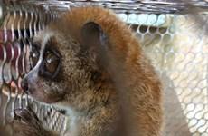 72 cá thể động vật hoang dã được giải cứu trong tháng Một
