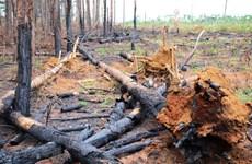 Xử lý nghiêm nạn phá rừng, không để 'xã hội đen' mua bán đất lộng hành
