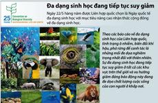 Nền đa dạng sinh học đang bị đe dọa bởi nạn buôn bán trái phép