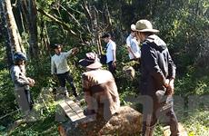 Chưa có sự đồng lòng về cách tiếp cận trong chia sẻ lợi ích từ rừng