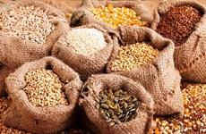 Xuất cấp hơn 1.200 tấn hạt giống hỗ trợ 3 tỉnh thiệt hại do thiên tai