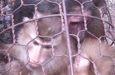 Cứu hộ 19 cá thể động vật hoang dã quý hiếm trong tháng Một