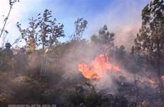 Công điện khẩn yêu cầu các tỉnh tăng cường phòng cháy, chữa cháy rừng