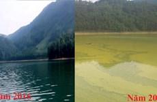 Vụ hồ Gò Miếu ô nhiễm: Doanh nghiệp vẫn nuôi cá lồng khi đã hết phép