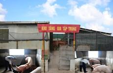 Bài 4: 'Cổ tích' có thật về phát triển 'nông nghiệp tự túc' trên đảo