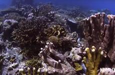 Công chiếu phim 'Truy tìm rạn san hô' kêu gọi bảo vệ tài nguyên biển