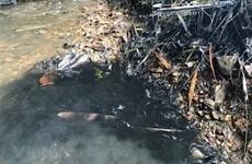 Xác minh, điều tra rõ đối tượng đổ trộm dầu thải làm bẩn nguồn nước