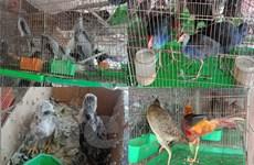 """Bài 5: Bảo vệ động vật """"sách đỏ"""": Nghiêm trị buôn bán trái phép"""