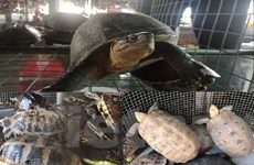 """Bài 4: Động vật """"sách đỏ"""" lâm nguy, rùa đứng đầu nguy cơ tuyệt chủng"""