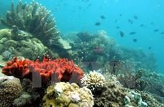 Tối thiểu 50% diện tích vùng biển, hải đảo được điều tra về tài nguyên