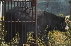 ENV ra mắt phim ''Chích hút mật gấu chỉ còn là ác mộng quá khứ''