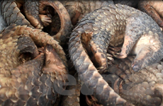 Khẩn trương soạn thảo Chỉ thị cấm mua bán, tiêu thụ động vật hoang dã