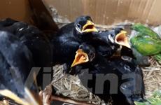 Đề nghị Long An xử lý nghiêm nạn buôn bán động vật hoang dã trái phép