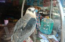 [Video] Hành trình giải cứu động vật hoang dã phòng chống COVID-19
